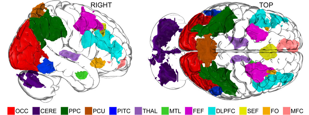 Scientists Now Understand How Imagination Works: 'Widespread Network' Allows Humans To Manipulate Abstract Thought