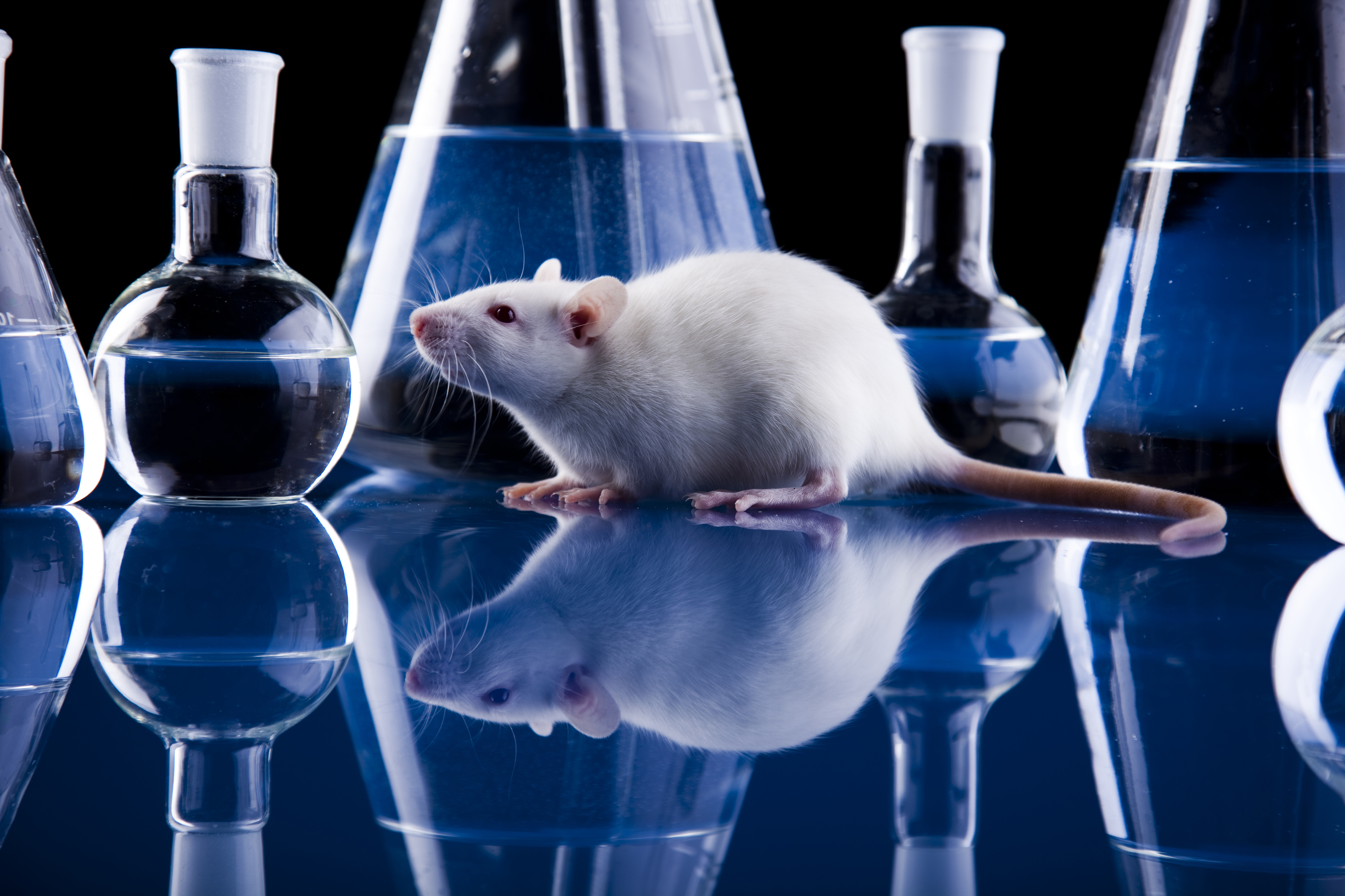 Could Animal Drug Testing Become Obsolete Chemosynthetic