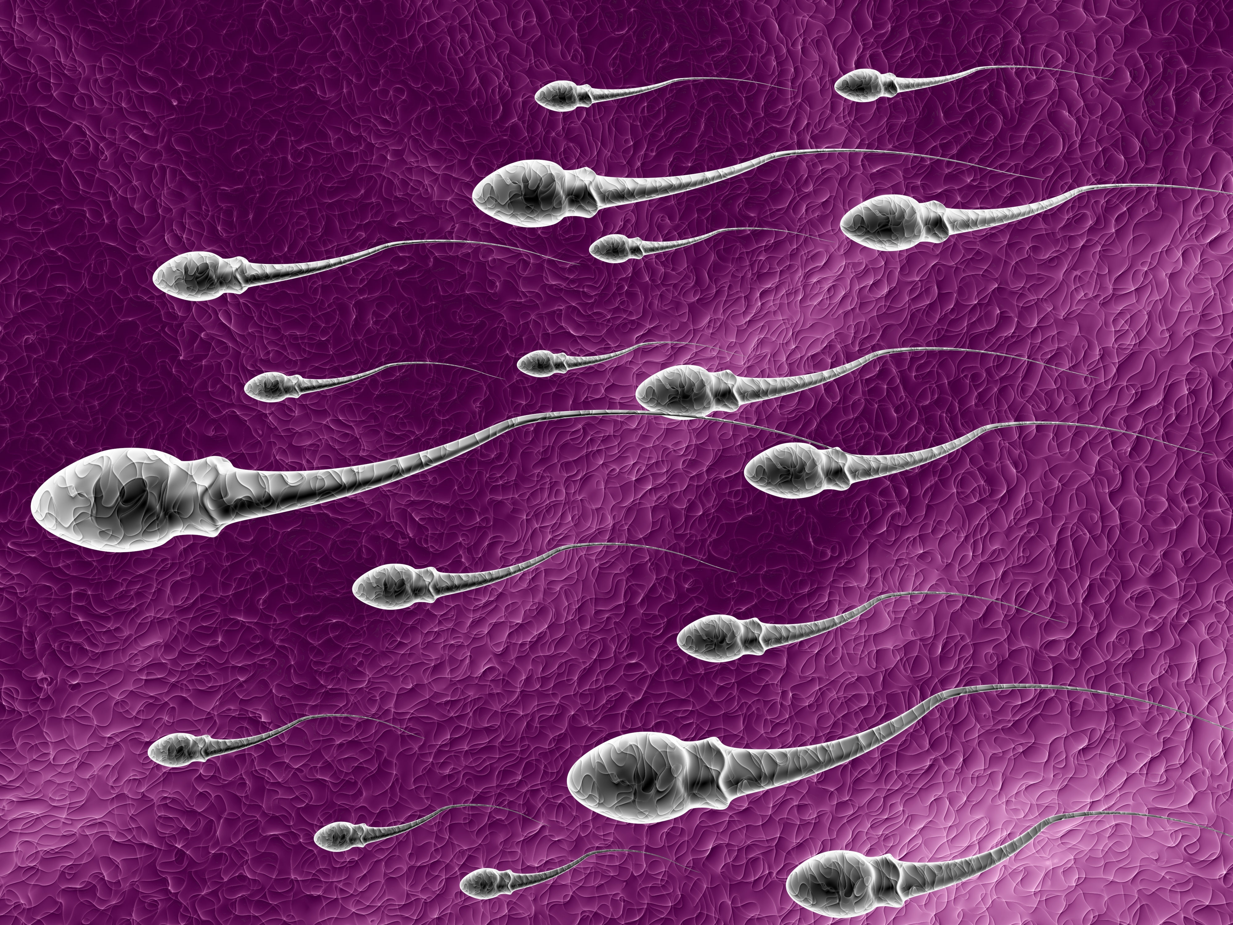 Stem Cell-Based Sperm Successfully Created From Skin Of Infertile Men: A Scientific First
