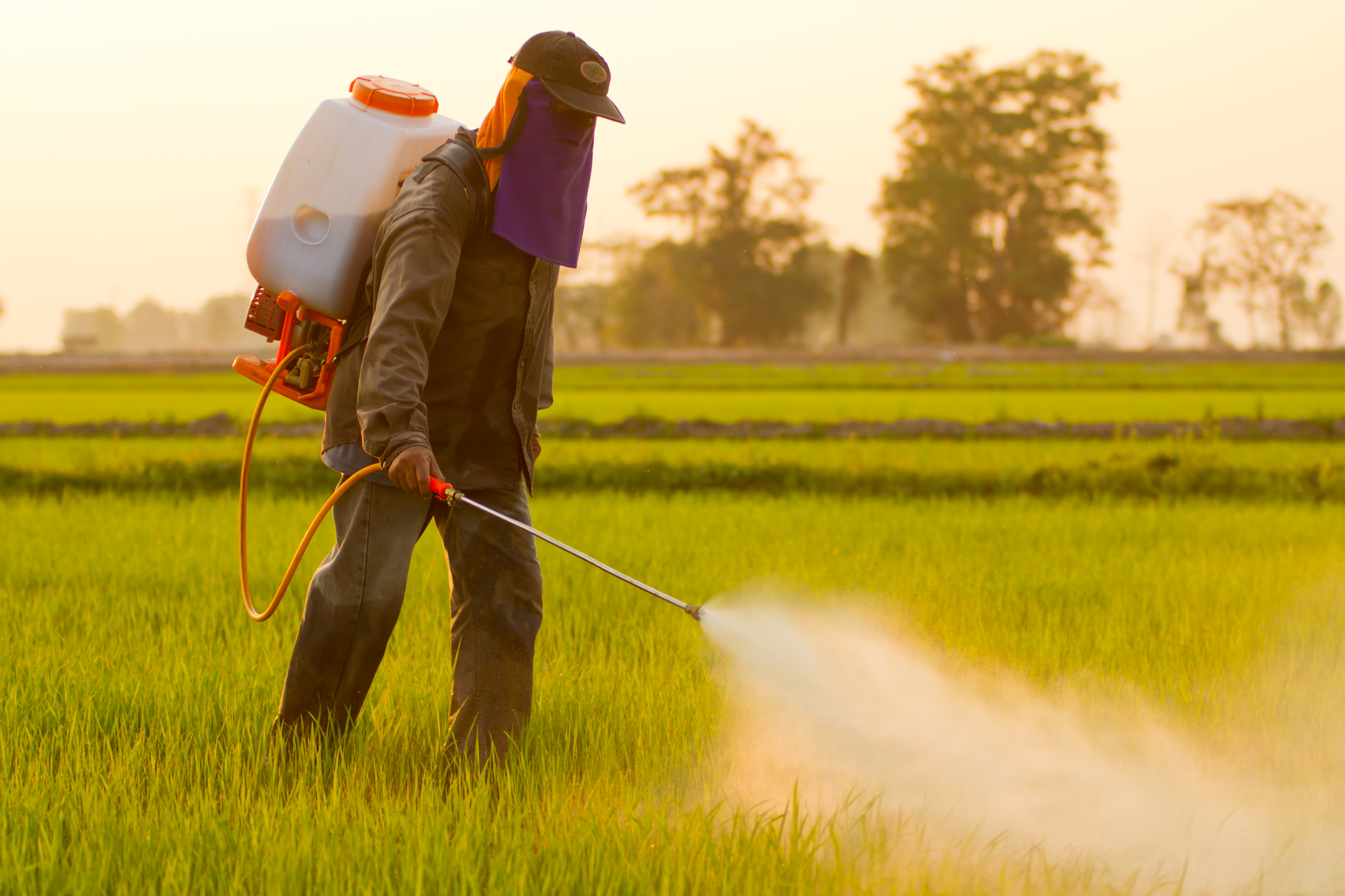 Popular Pesticide From...