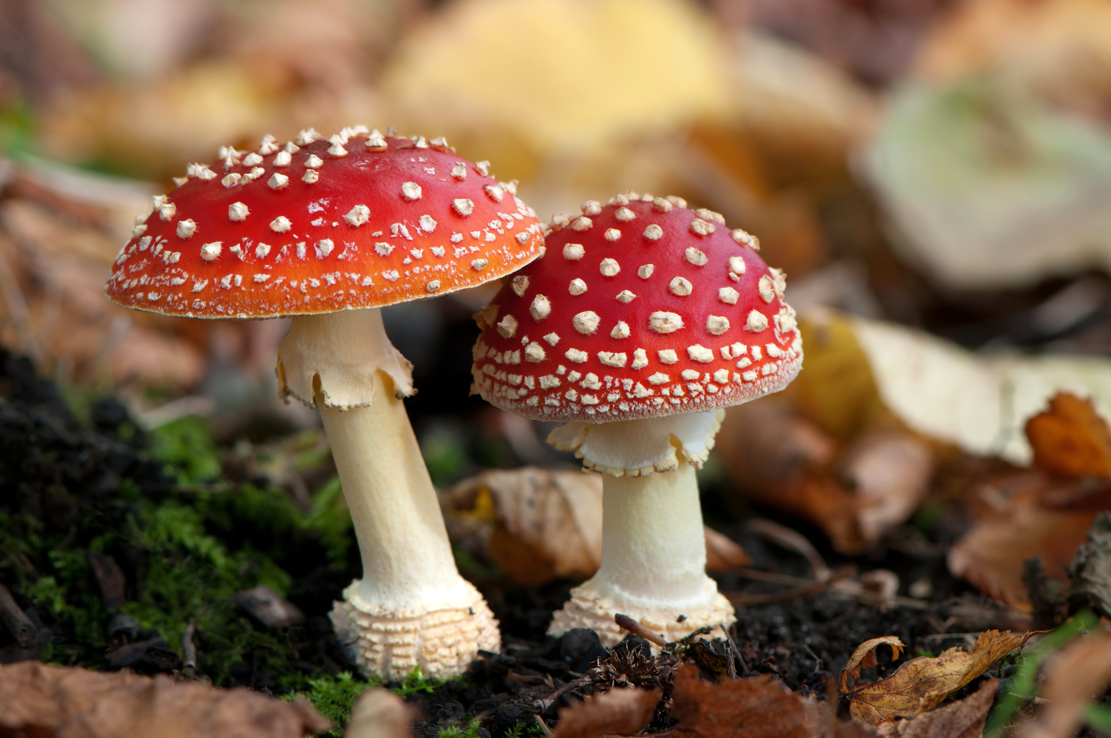 Mycology: The Study Of Fungi - warts.org
