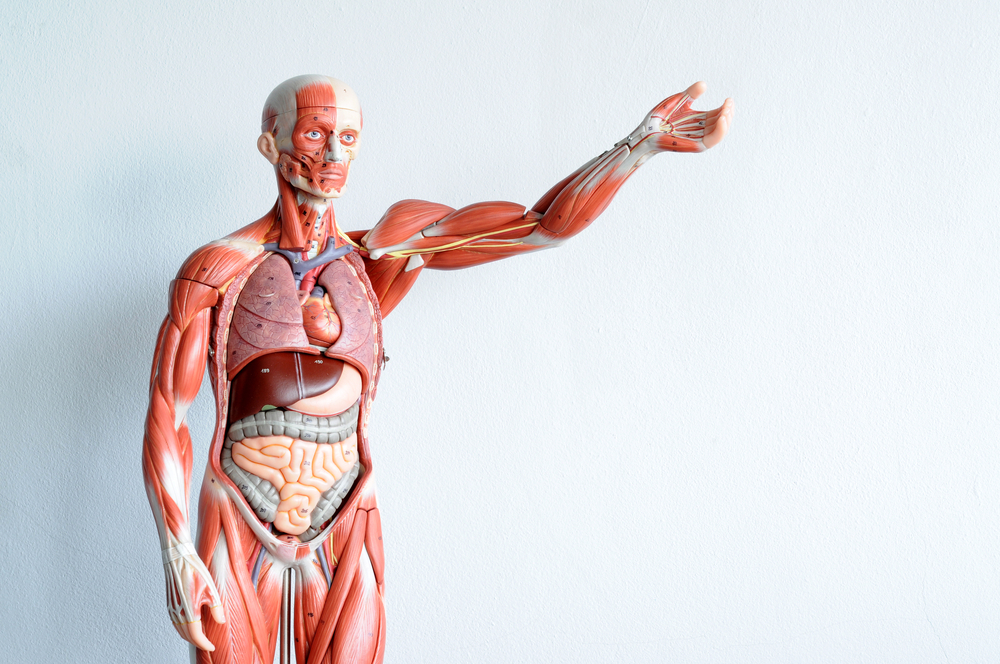 Human Body\'s Chronological And Biological Age May Differ: Why Your ...