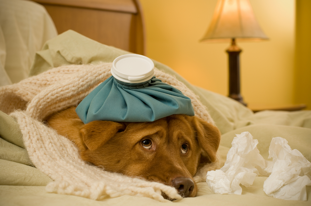 Did Your Dog Give You A Stomach Flu  Norovirus May Spread