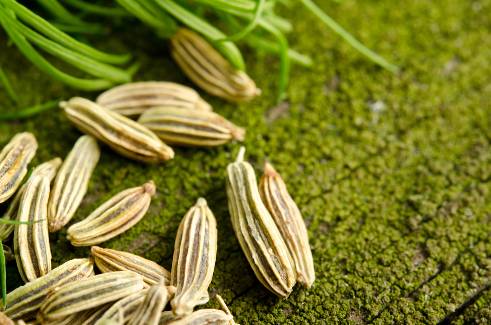 what is fennel good for  6 conditions it can help relieve
