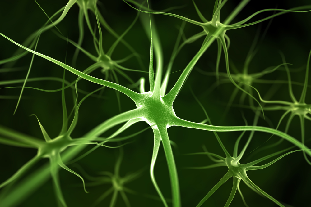 Blood Turned Into Nerve Cells May Be Used For Specialized
