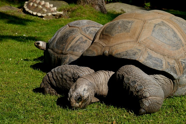 6 Animals With Longer Lifespans Than Humans: What Can ...
