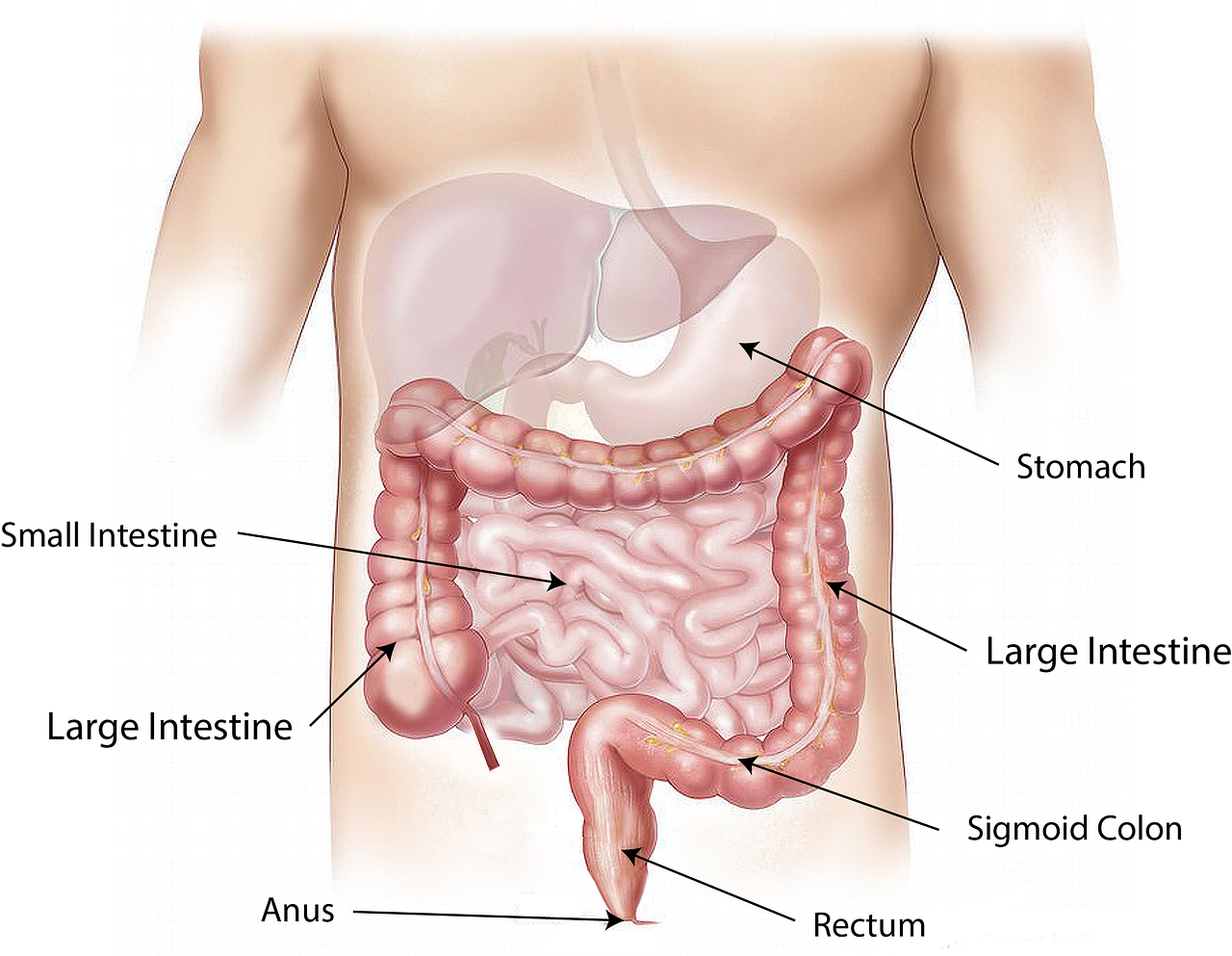 Anal sex and colon cancer