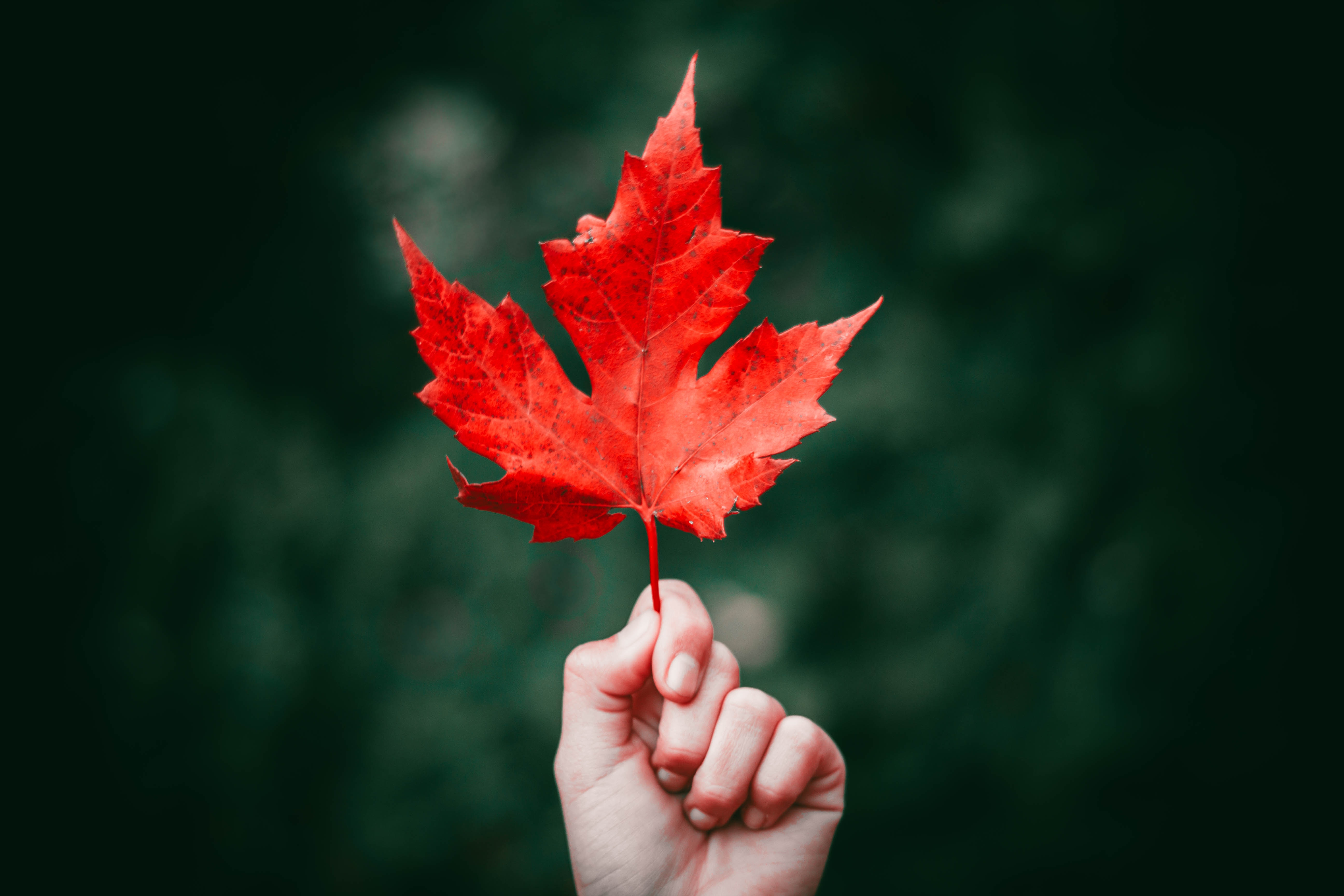 Natural Botox Alternative Maple Leaf Extract Could Prevent Wrinkles
