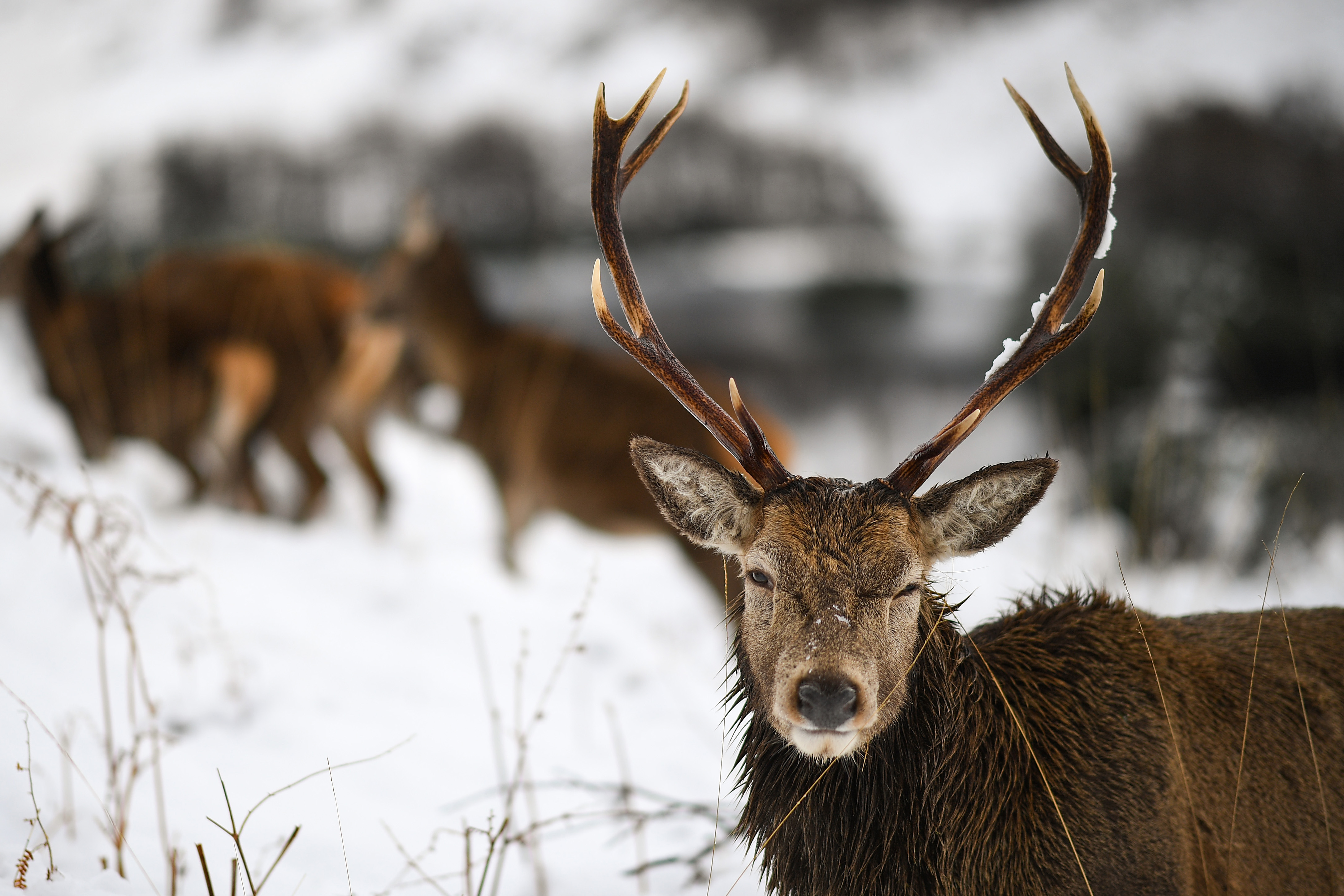 New Trans Am >> Zombie Deer Disease: Can The Disease Affect And Spread To Human Population?