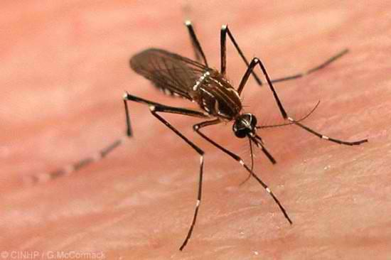 Dengue Fever Infections Soar To 390 million, Three Times Previous Estimates