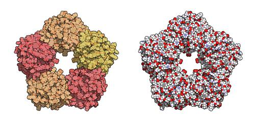 Protein biomarkers