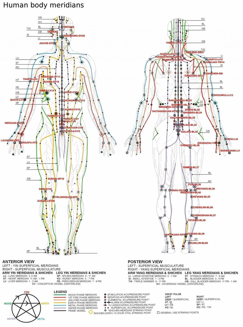 The Truth About Pressure Points: Which Ones Can Kill You And Which ...
