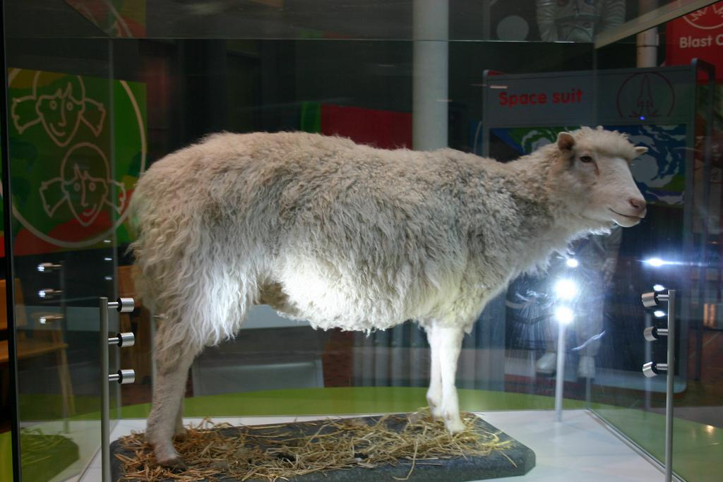 an analysis of the announcement of the cloned ewe dolly in 1997 by scientists in scotland Free essay on cloning research available totally free at echeatcom in february 1997, the roslin institute in scotland the cloned sheep, dolly.