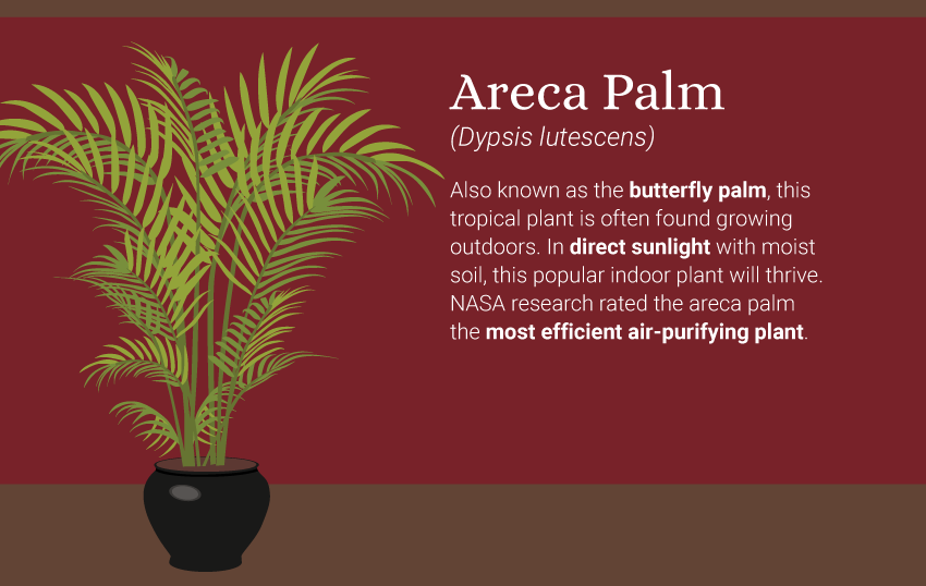 5-best-plants-for-air-quality