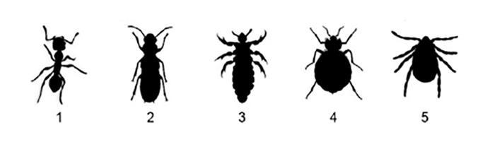 Common Insect Lineup