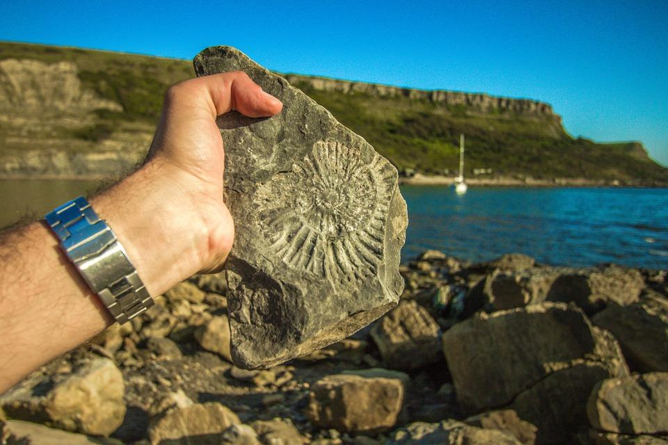 fossil-1000575_960_720
