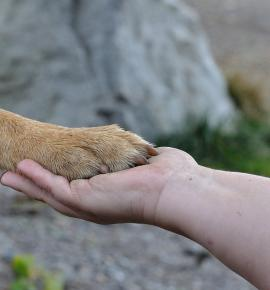 avoid-hand-sanitizers-dogs-paws