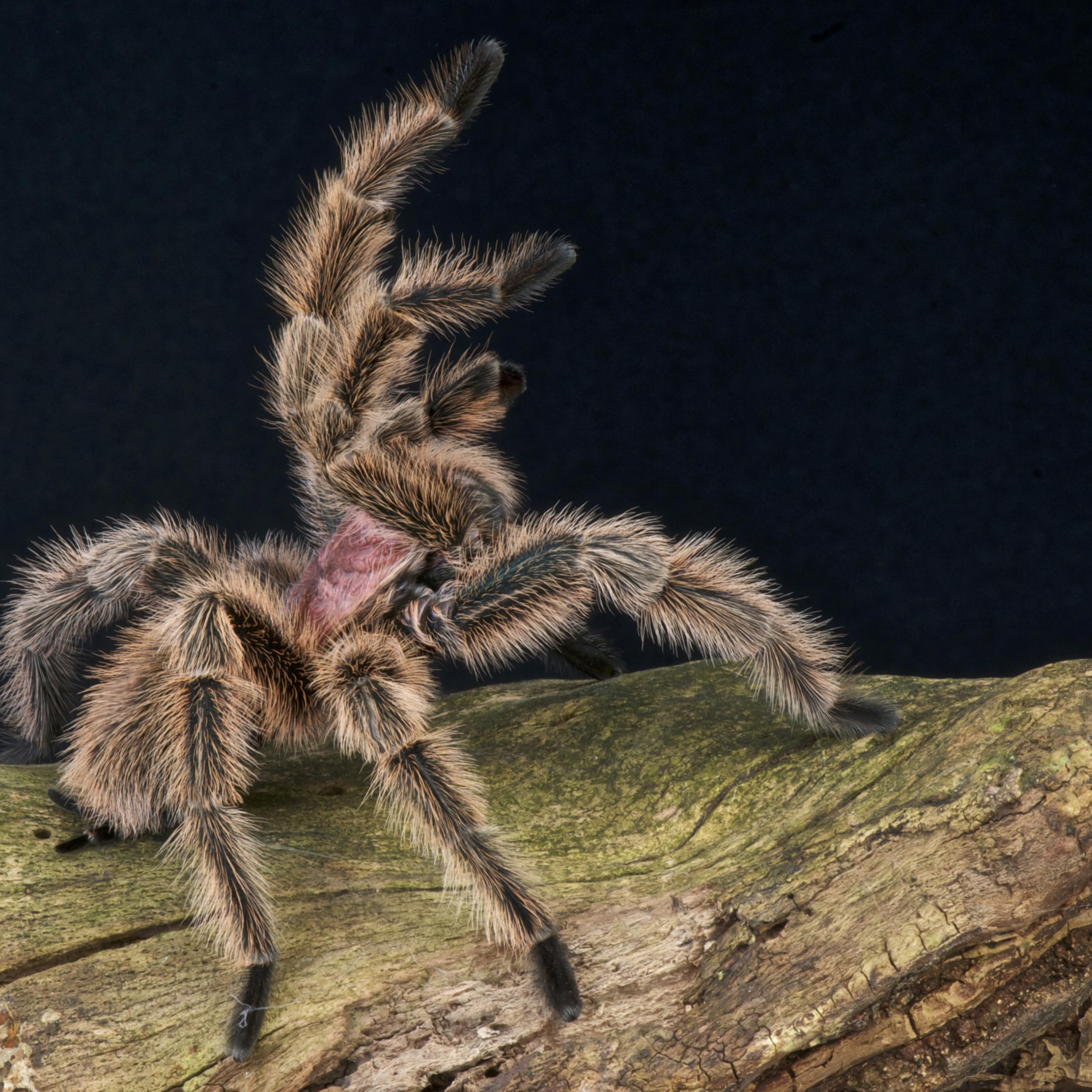 Venom As Medicine: How Spiders, Scorpions, Snakes, And Sea