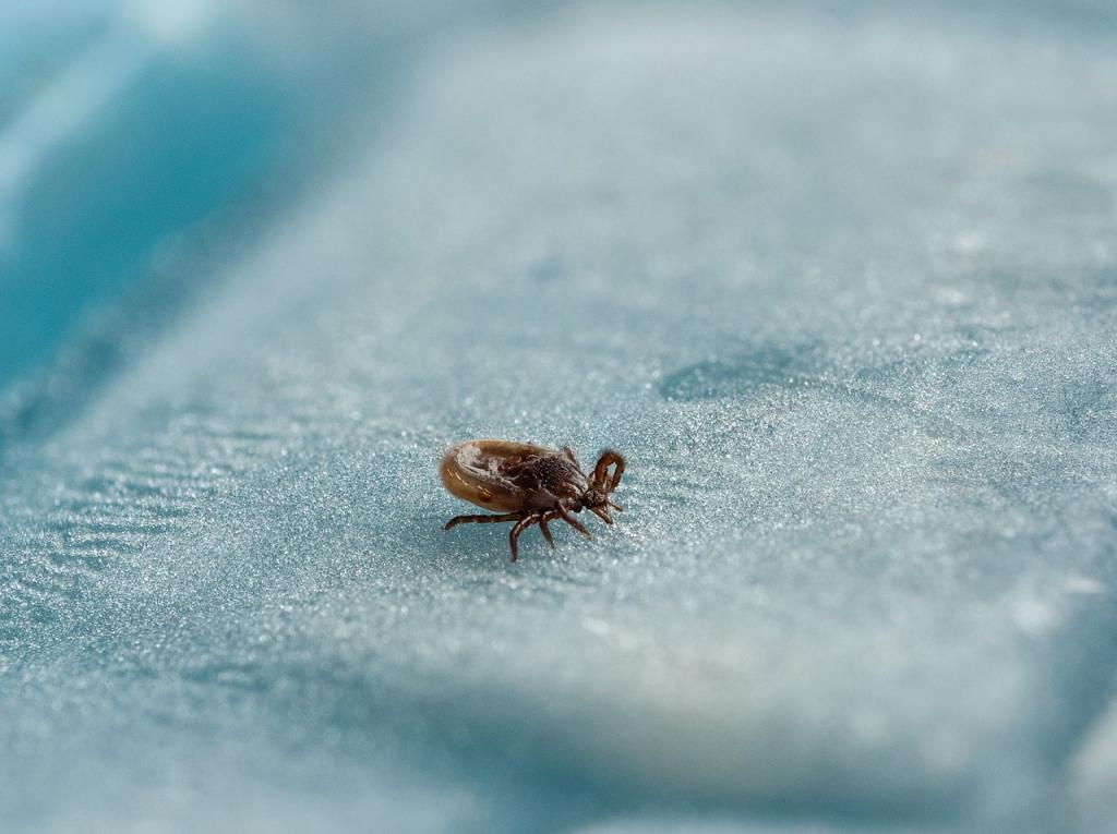 The facts doctors do not tell you about ticks
