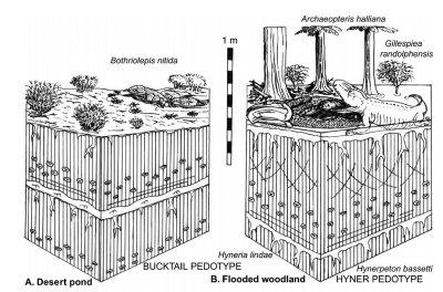 Romer's desert hypothesis, left, and Retallack's flooded woodland, right.