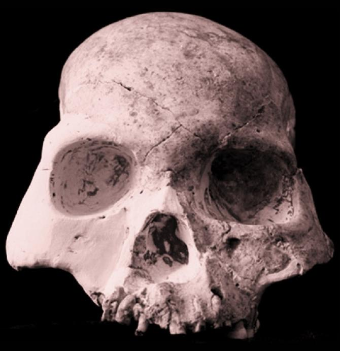"""Partial Skull of the Mystery Species Dubbed the """"Red Deer Cave People"""""""