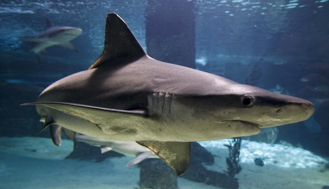 sharks are so hot right now