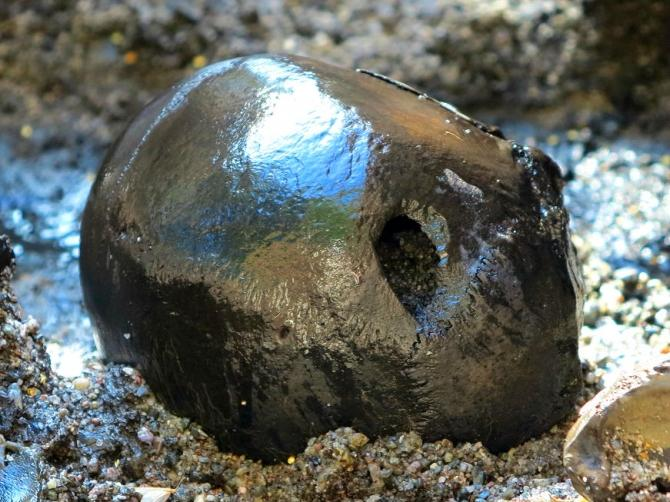 This is the first skull from the 2012 dig with a mortal wound caused by a spear or an arrow.