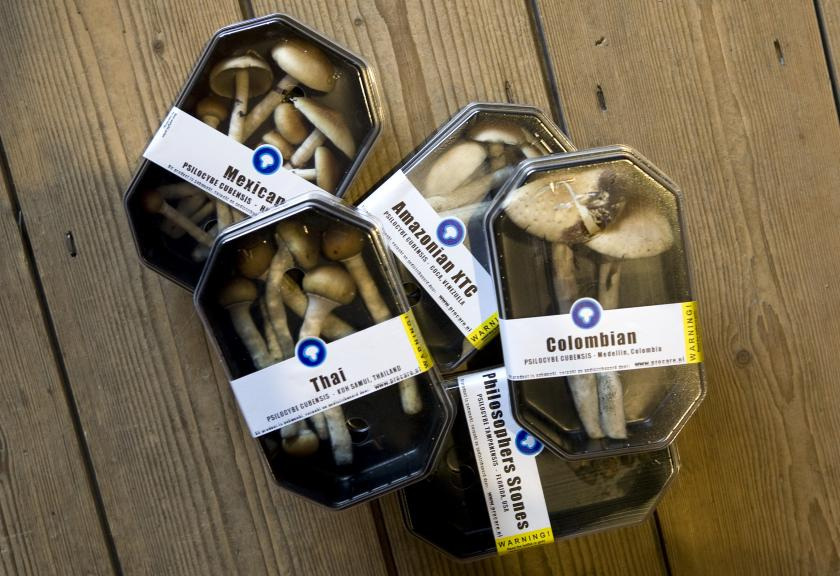 Boxes containing magic mushrooms at a coffee and smart shop in Rotterdam