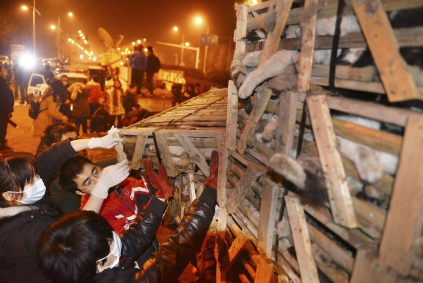 1,000 cats shipped off to restaurants to be slaughtered as cat meat, China