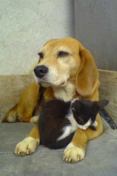 Dog and cat laying down.