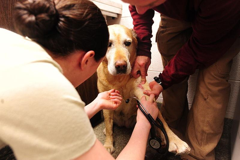 Dog being treated for an infectious disease.