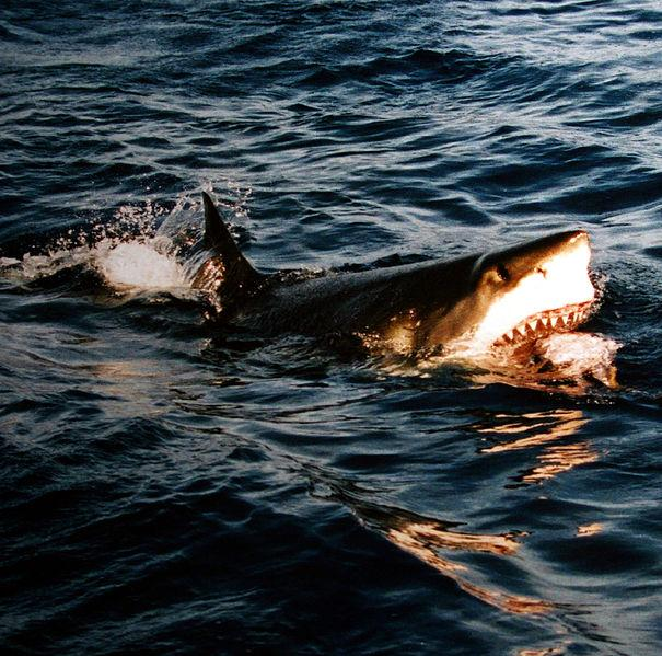 A 15 Year Old Boy Fought Off Shark At Surfside Beach In Texas On Monday Creative Commons