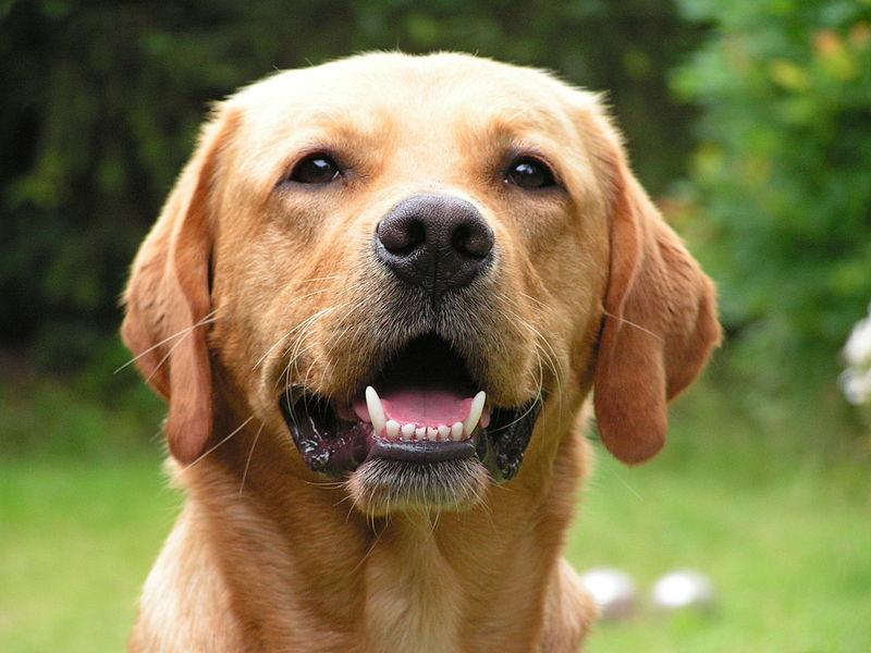 Contrary to Popular Belief, Dogs May Remember Events From the Past