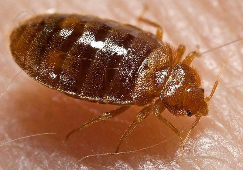 New York City's Health Department Infested By Bedbugs