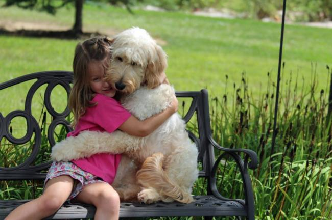 A Family Dog Accompanies A Little Girl To Parties And To School In Order To Track Down Foods With Nuts That Might Harm Her Caters