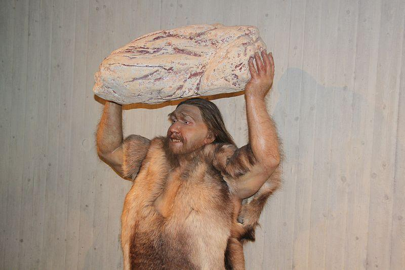 800px-Homo_neanderthalensis_lifting_Rock_close_Reconstruction_-_Museum_Neandertal