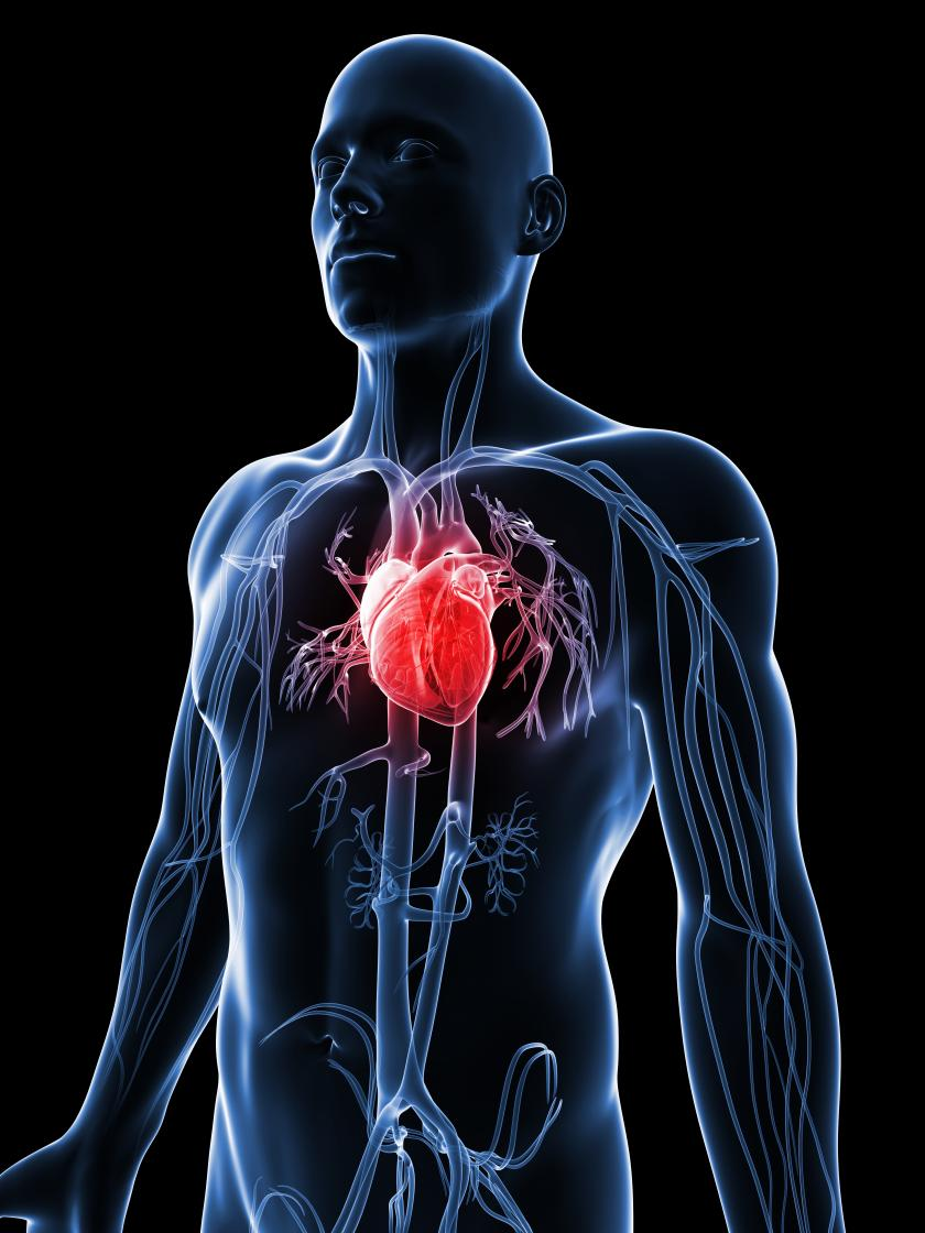 Cardiovascular Disease  >> Fda Approves Stem Cell Treatment For Heart Disease Mayo Clinic To