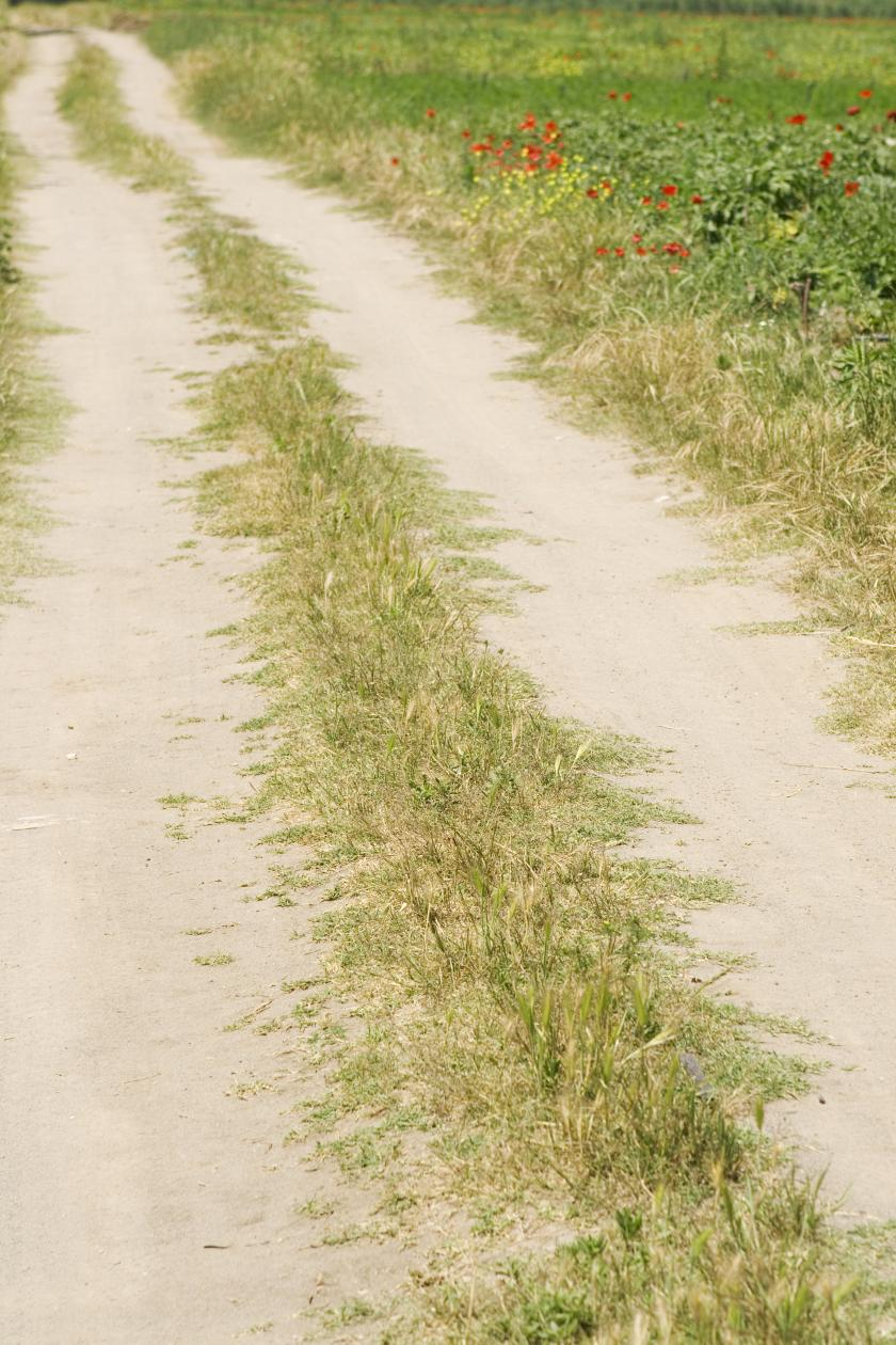 shutterstock image of dirt road