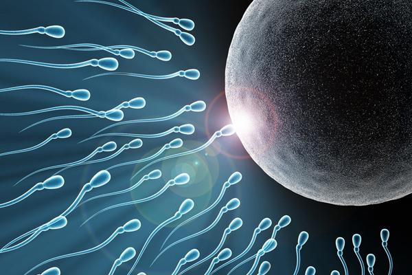 Why sperm without seminal fluid