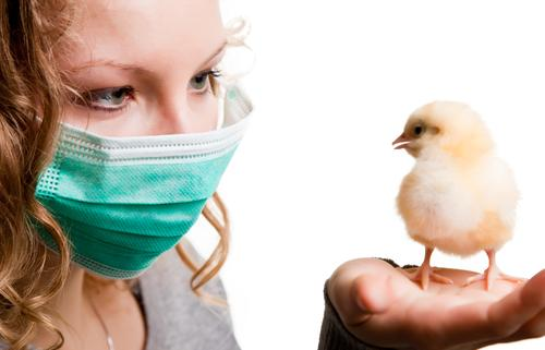 Woman wearing mask holding chicken