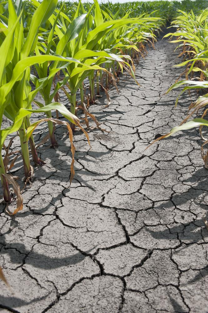 The U.S. Is Experiencing A Historical Drought In Seven States