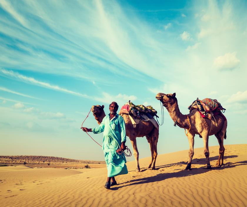 camel and MERS