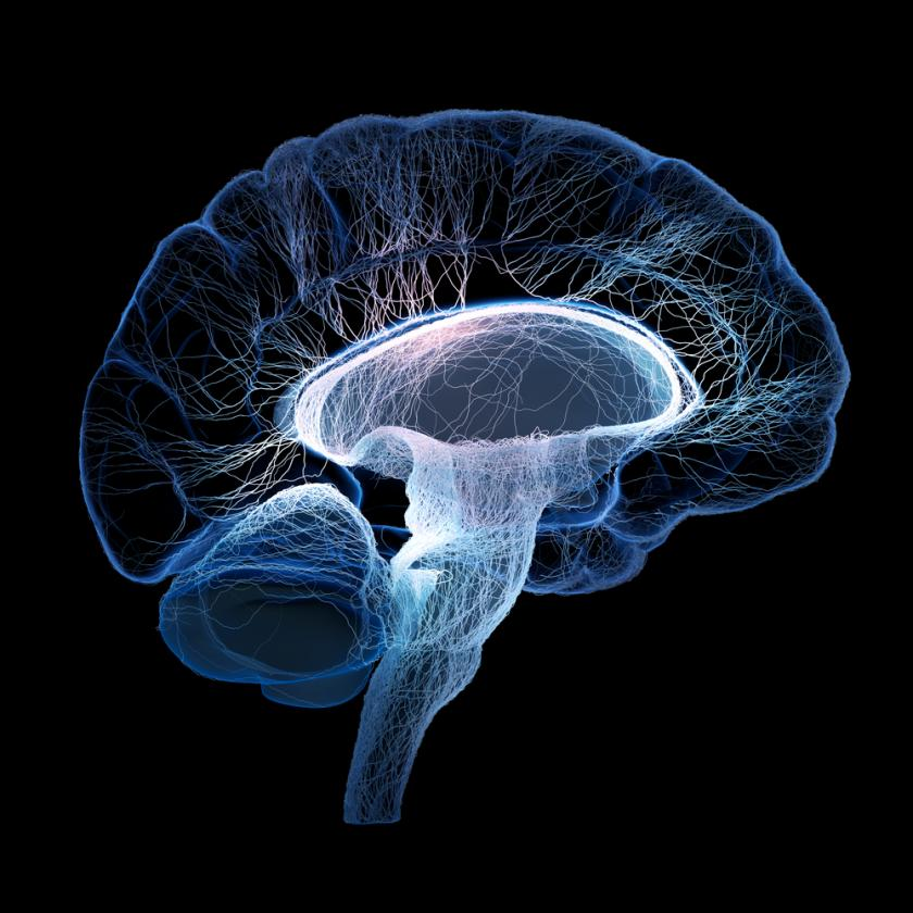 Brain Cells Reveal Another Function That May Cause Neurological Disorders