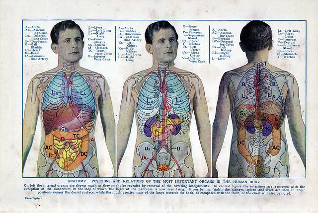 The Effects Of Obesity You Cant Always See 5 Major Organs Damaged