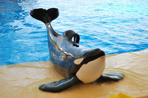 SeaWorld decides not to appeal OSHA order