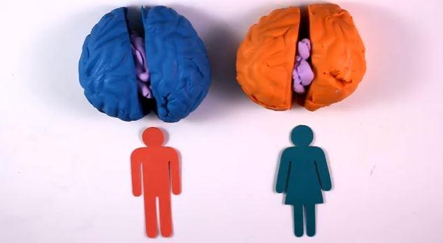 brain differences between genders Many people — well-intentioned and otherwise — like to point out the supposed differences between male and female brains but it's time to throw away the brain gender binary, according to a study published monday in the proceedings of the national academy of sciences brains, the study.