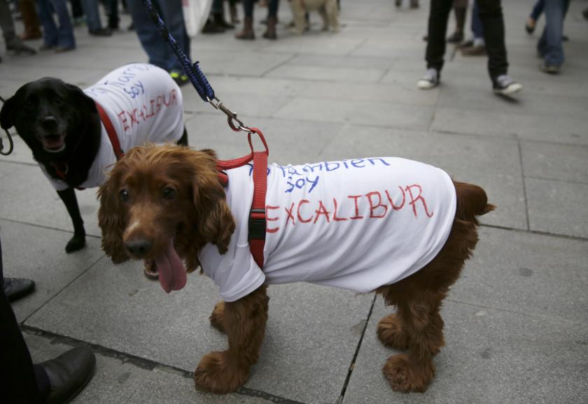 Dogs Protest