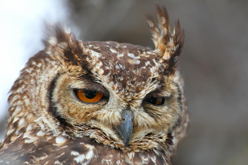 Sleep Deprivation Causes Night Owls To Be Unhappy