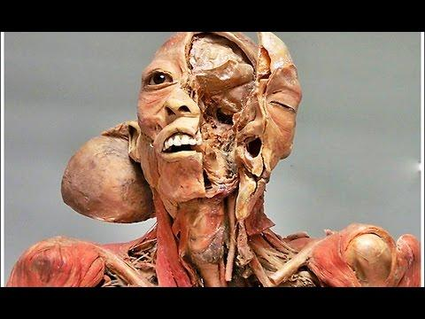 Do You Know Your Body 25 Mind Blowing Facts About The Human Body