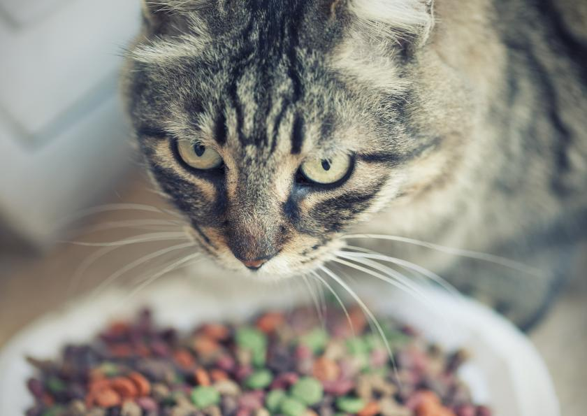 Cat Parasite Linked To Mental Illness In Humans